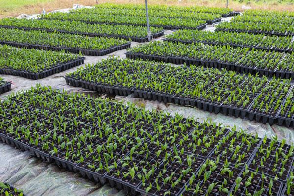 Curso producci n de semillas y plantas en vivero for Viveros y jardines