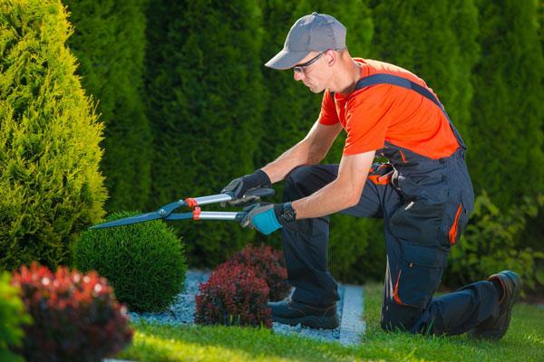 Curso de instalaci n y mantenimiento de jardines y zonas for Mantenimiento de jardines