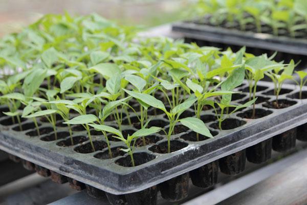 Curso producci n de semillas y plantas en vivero online for Vivero plantas online
